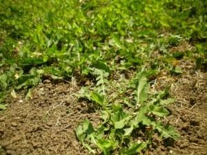 Overgrown-300x225