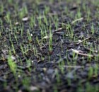 Watering-grass-seeds-300x200