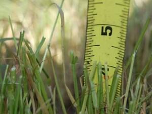 grass merge